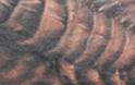 bg28.jpg